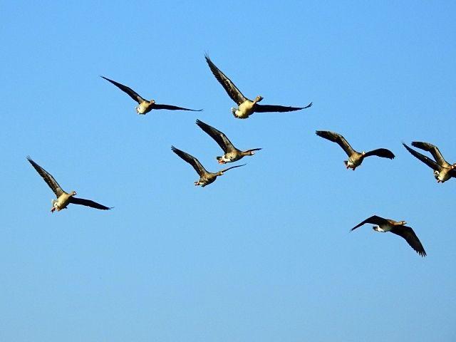 早春の渡り鳥を観察しませんか?