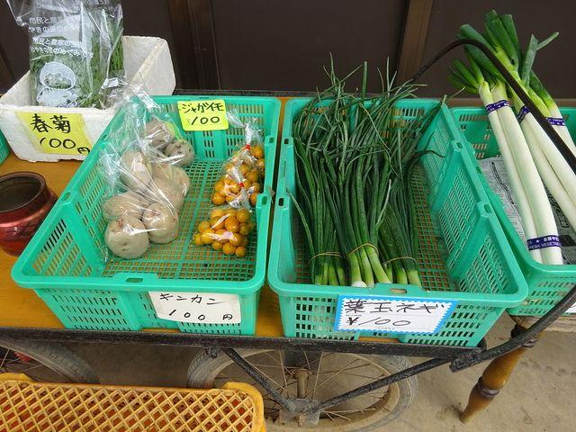 農家さんの直売所に並ぶ野菜(春菊・ジャガイモ・キンカン・葉玉ネギ)