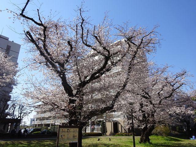 西東京市富士町1丁目にあるさくら公園の様子 1