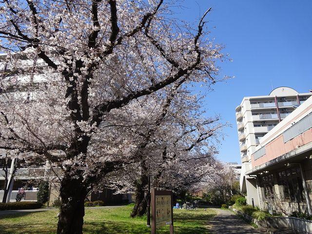 西東京市富士町1丁目にあるさくら公園の様子 2