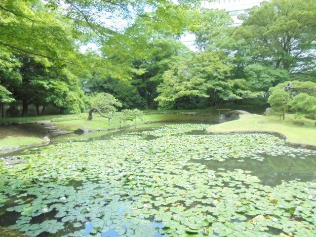 8月13日(日曜日)は、妻と一緒に東京散策第一弾と称して「後楽園」~「こんぴらさん」~神楽坂に行ってきました。下町の三ノ輪育ちの私ですが‥後楽園は初めて。「エッ、こんなに大きかったの?」と驚くばかり。そして木陰の涼しさに癒やされたしだいです。