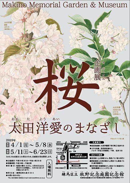 企画展「桜」大田洋愛のまなざしのチラシ
