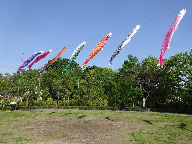 あらやしき公園の鯉のぼり(4月29日)2