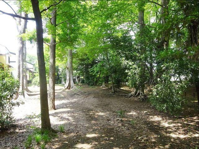 井頭の森緑地 3