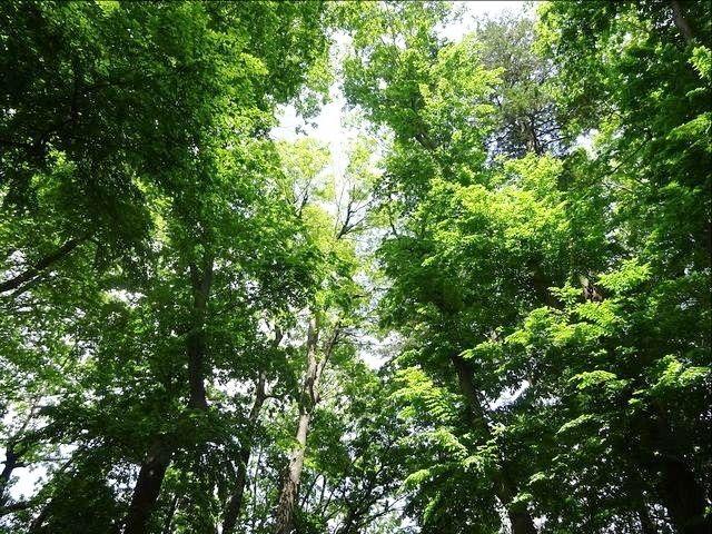 井頭の森緑地の樹々