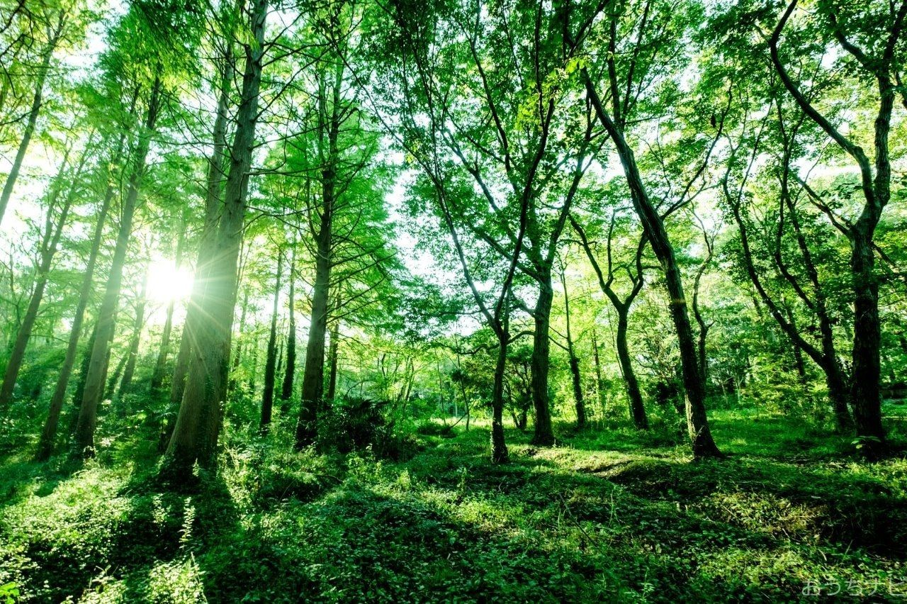 西東京市内で育った苗木を活用し、植木事業者の皆さんが講習会・デモンストレーションなどを行います。自分で作る「緑」の魅力をぜひ体験しませんか?