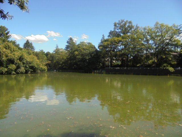 西武新宿線の「武蔵関」と「東伏見」駅間にあり、東伏見駅から徒歩5分に所在(練馬区関町北3丁目45番1号)、遊歩道に囲まれたひょうたん型の大きな池のある公園です。