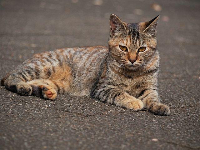 飼い主のいない猫