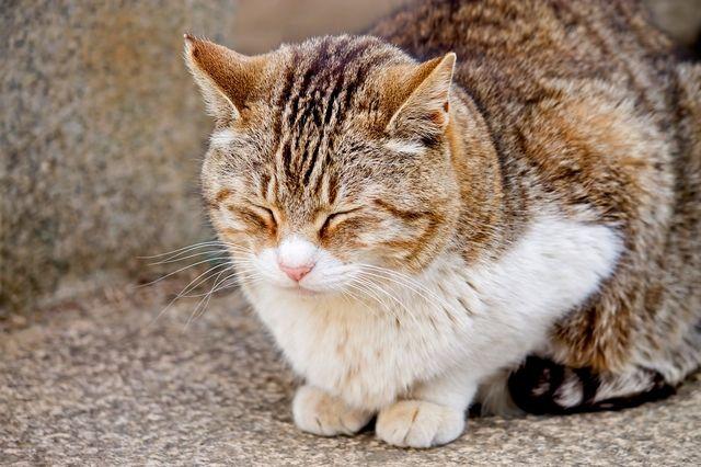 眠たげなネコ スプラッシュ