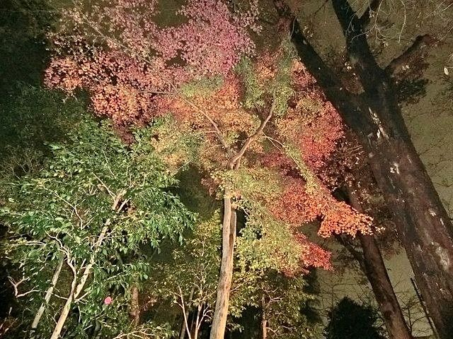 下保谷特別緑地保全地区紅葉する樹々4
