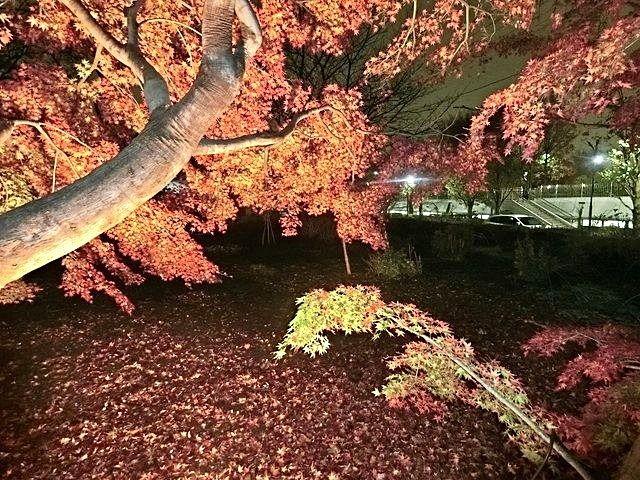 下保谷特別緑地保全地区紅葉する樹々3