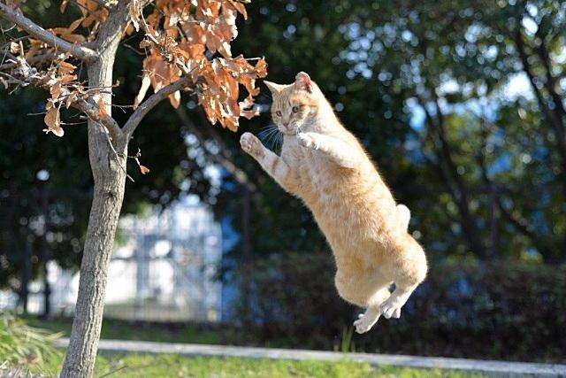身を固くして空を飛ぶネコ スプラッシュ
