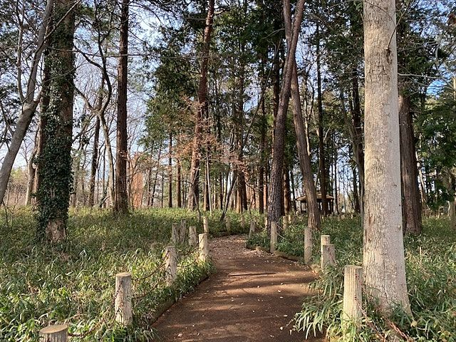 西原自然公園の遊歩道(2020・1・16)スプラッシュ