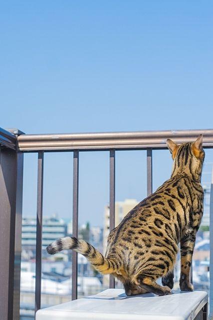 室外機の上に乗り空を見上げるネコ