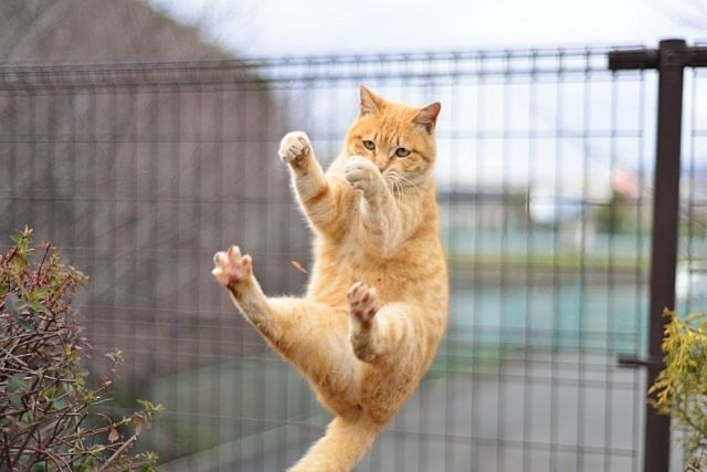 ネットフェンスに掴まりフリーズしてしまう愛猫