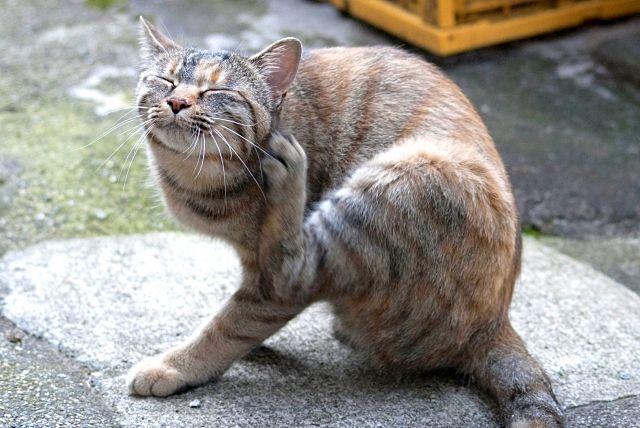 気持ちよさそうに毛づくろいする愛猫