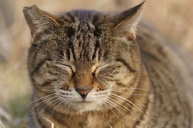 眠い…愛猫