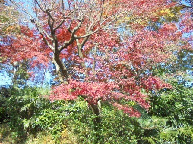 武蔵関公園5