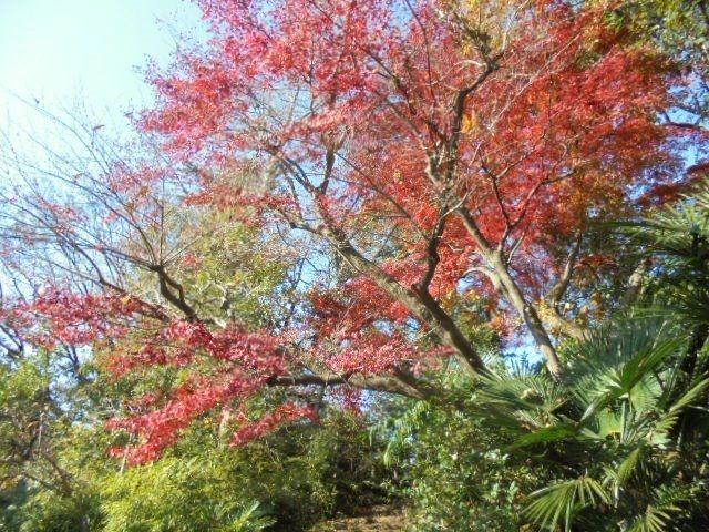 紅葉する武蔵関公園