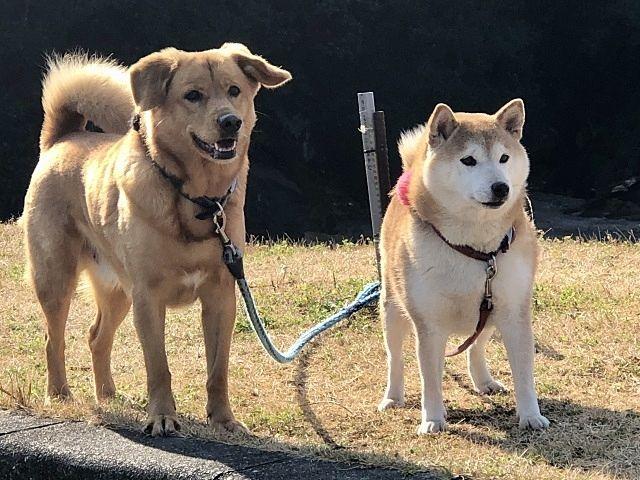 大切な家族の一員の犬たち