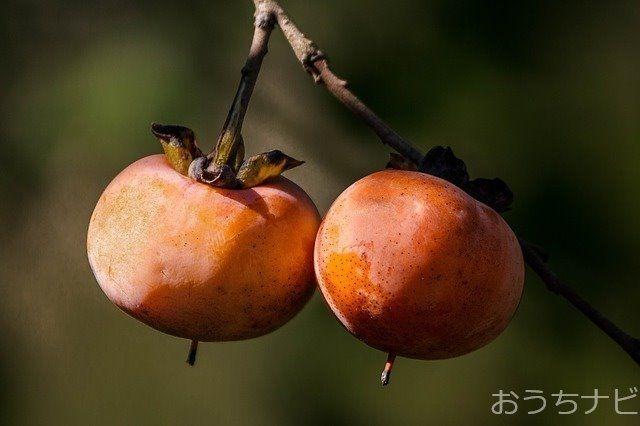 練馬区では果樹を活用した体験学習事業を行います