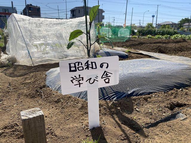 昭和の学び舎の畑が北原にできました