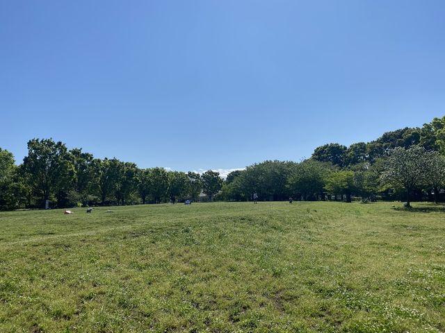 いこいの森公園の芝生広場(スプラッシュ)