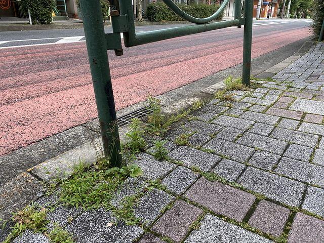 西東京市富士町4丁目かえで通り沿いの歩道(2020.6.7)