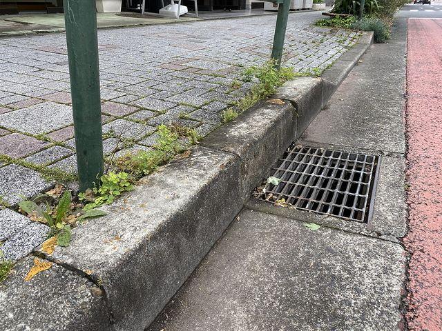 西東京市富士町4丁目かえで通り沿いの歩道(2020.6.7)3