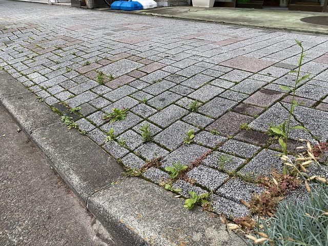 西東京市富士町4丁目かえで通り沿いの歩道(2020.6.7)2