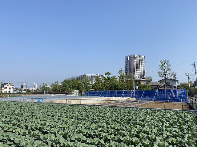 西東京市産農産物販売会を開催します!!