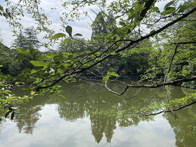 武蔵公園のひょうたん池