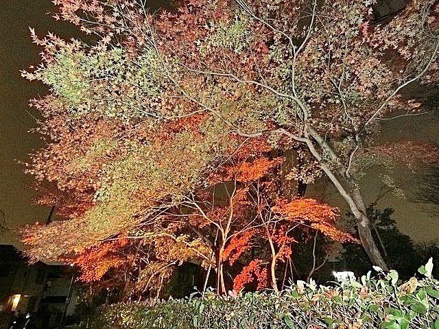 ライトアップされた屋敷林の様子 スプラッシュ