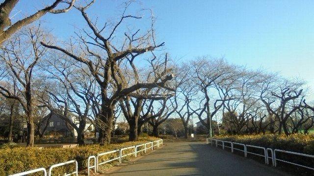文理台公園の並木