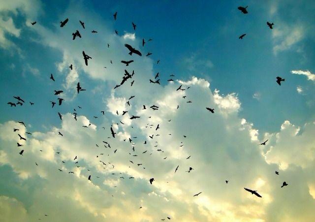 素晴らしい野鳥たちの世界 日本の野鳥と自然の魅力 練馬区立はつらつセンター豊玉