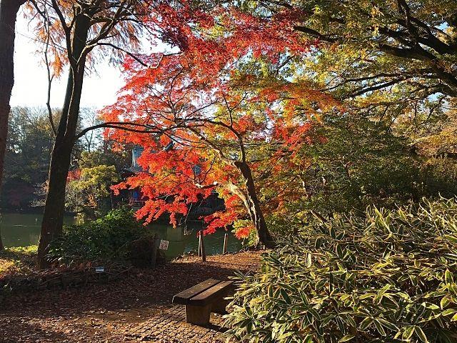 紅葉する井の頭公園 スプラッシュ