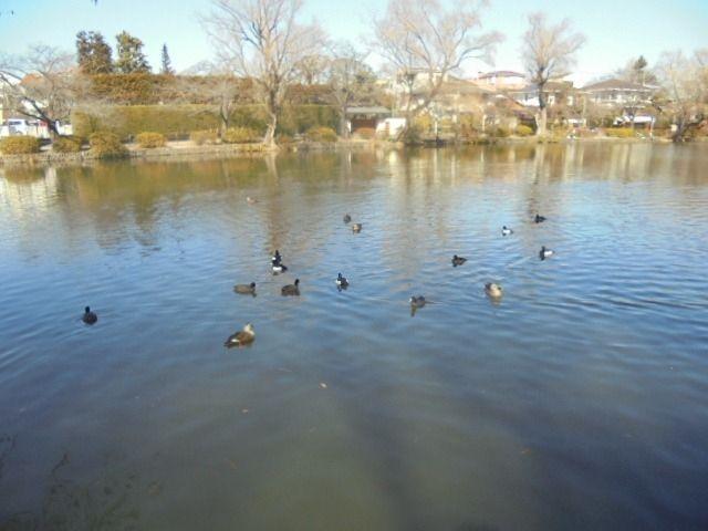 野鳥が湖面を泳いでいる様子