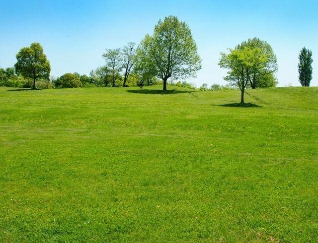 6ヘクタールある広大な光が丘公園の芝生広場