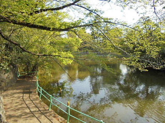 緑が眩しい武蔵関公園