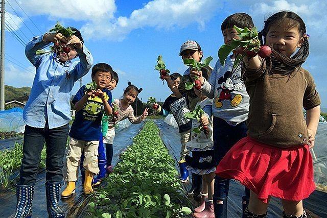 通常、市場に出ている野菜は少なくとも収穫から3日以上経っており一番おいしい時の少し前に収穫しますが、シェア畑では一番おいしい時に収穫してそのまま食卓に並べる事ができます