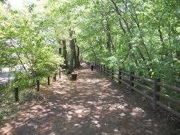 平成29年4月22日(土曜日)午前8時~玉川上水水辺のウォーキングをしませんか?