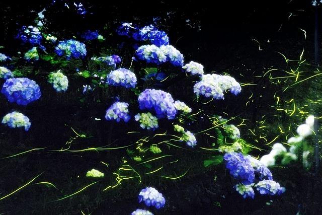 ホタルの夕べ~淡い光を、そっと見に来ませんか?練馬区立石神井公園ふるさと文化館