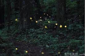 樹木の上では野鳥が木の実を食べ、足元にはたくさんの昆虫たちが暮らし、 暑い夏の夜には池と小川でヘイケボタルが光り舞います。