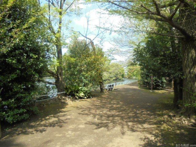 弊社から歩いて6分の場所にある武蔵関公園は、小さな池を取り囲むように緑がいっぱいです。