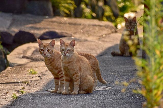 地域の不幸な猫を増やさない講演会