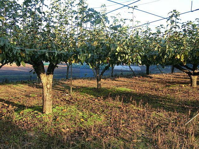 収穫を終えたぬくい果樹園の園内の様子