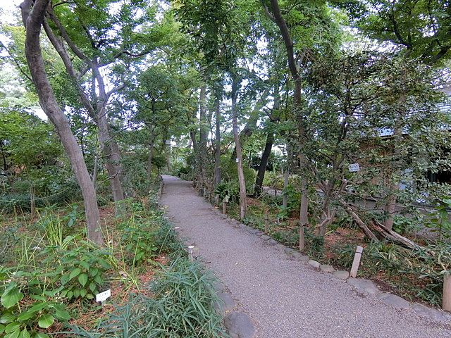 牧野記念庭園内の散策路3