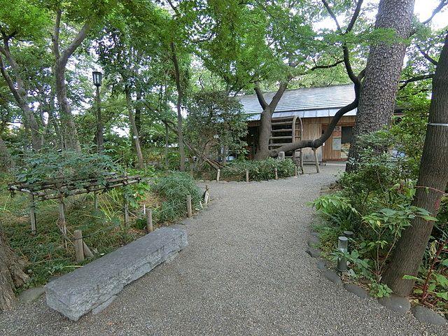 牧野記念庭園内の散策路2