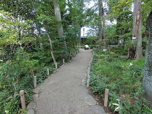 牧野記念庭園内の散策路1