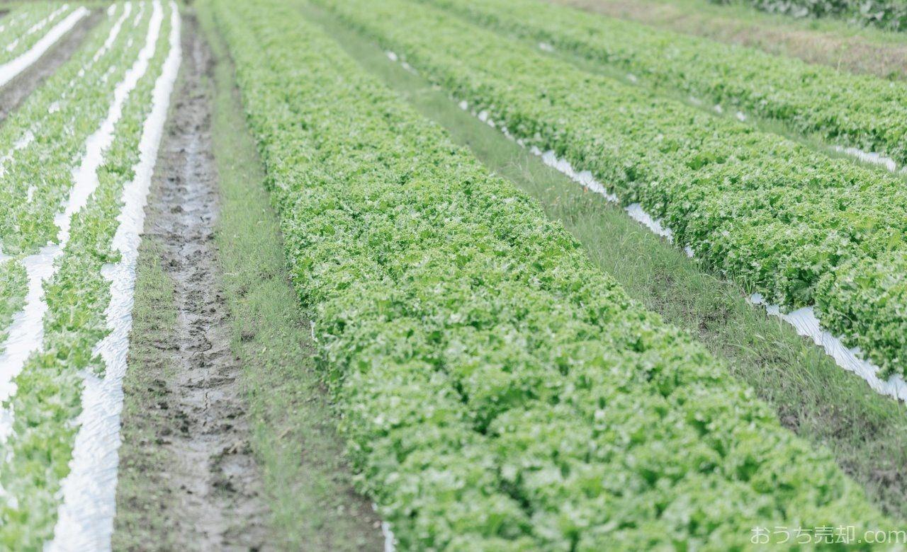 野菜の作付けや収穫体験を通して、農とふれあう楽しさを学びます